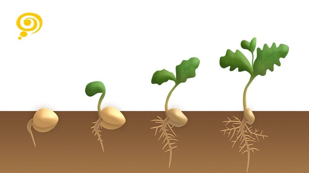 sementes de sucesso